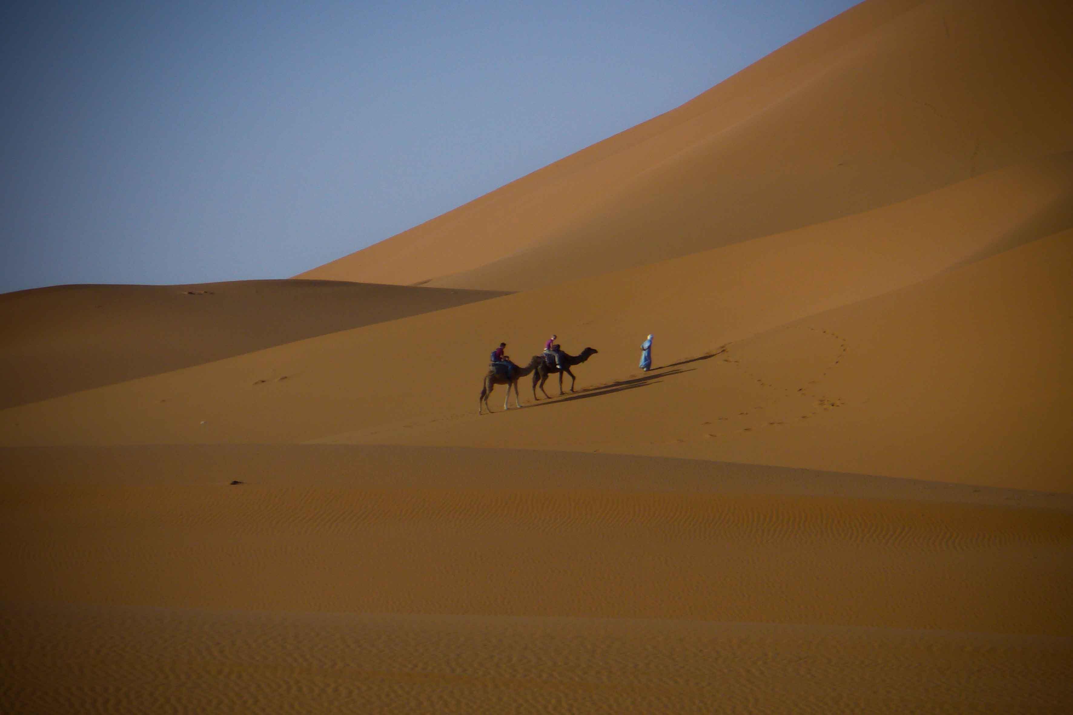 Nel Deserto Cammelli Nel Deserto di Erg